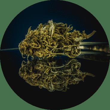LE LAB SHOP - Fleurs CBD@2x