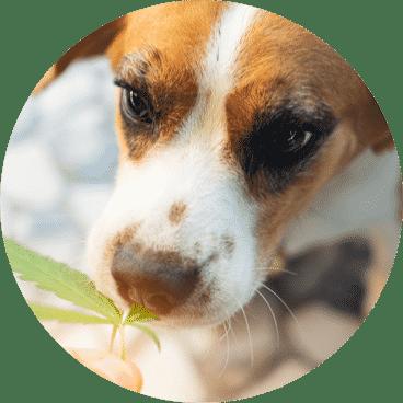 LE LAB SHOP croquettes et friandises pour animaux de compagnies